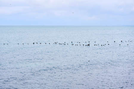 seascape with a flock of migratory birds flying low above the water surface
