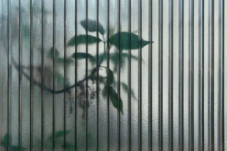 abstract background - leaves of living trees shine through a semi-dark polycarbonate sheet