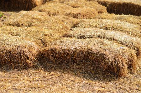 golden straw texture background photo