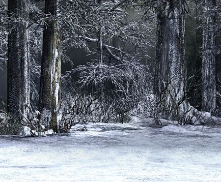 rural scene: A snowy and wintery day in the deep woods.