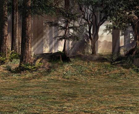 tu puedes: En la linde del bosque se puede ver el sol filtrado a trav�s de los �rboles.  Foto de archivo