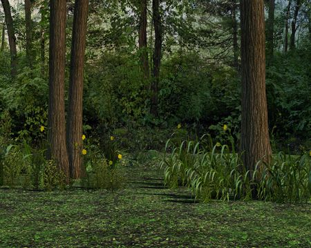 unrestricted: A dark forest woodland perfect for hunting or chanting up a spell. Stock Photo