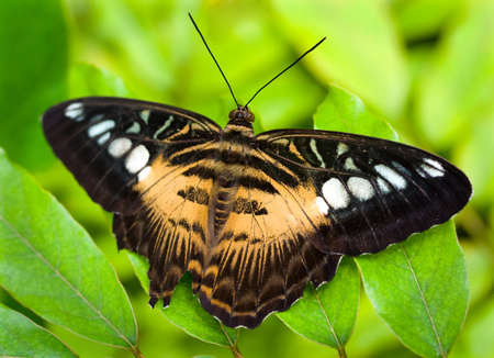 brown butterfly photo