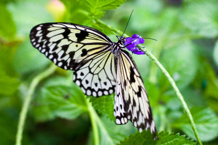Black and white butterfly photo