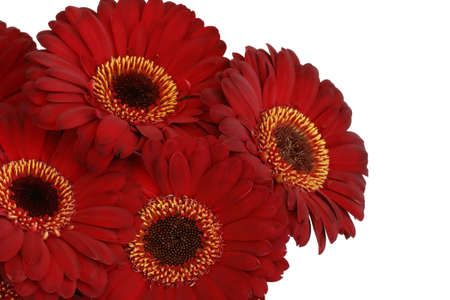 Bunch of red gerbera daisies photo