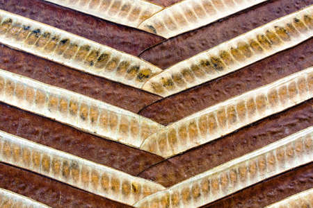 earthly: abstract wooden background