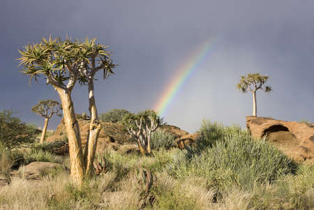 namibia: Colorful rainbow with quiver trees on a hill in South Africa Stock Photo