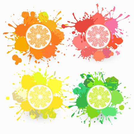 citrus fruits: set of four citrus fruits Illustration