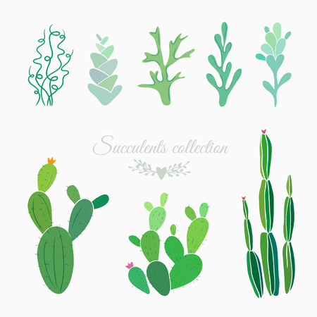cactuses, ferns, moss and succulents isolated on white, vector floral elements