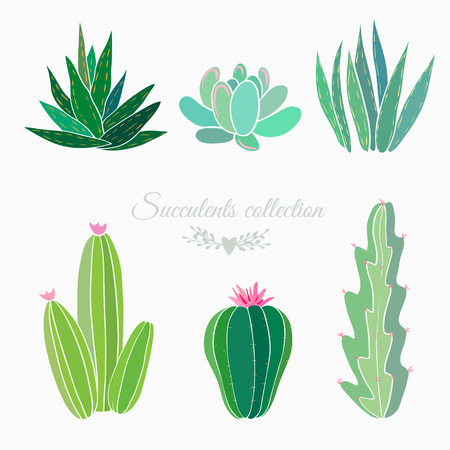 set of cactuses and succulents isolated on white, vector illustration