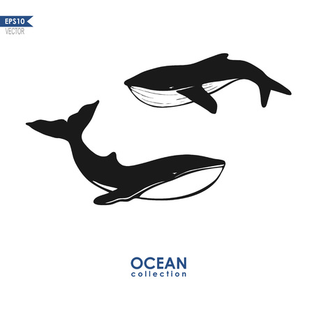 grampus: whales silhouettes, vector illustration of two whales isolated on white