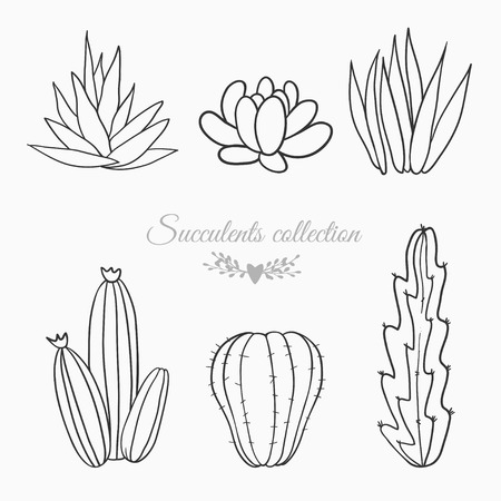 plantas del desierto: black and white sketches of cactuses, succulents and other desert plants