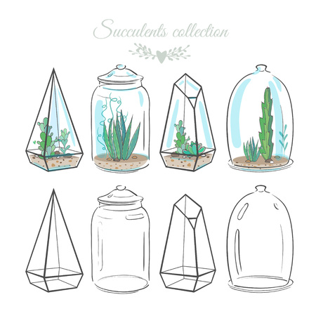 set of floral compositions with cactus and succulents in decorative glass containers Vectores