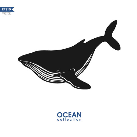 humpback whale isolated on white, vector whale silhouette Illustration