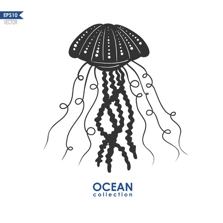 oceanic: vector illustration of jellyfish, jelly fish isolated on white, vector medusa silhouette, sea creature illustration