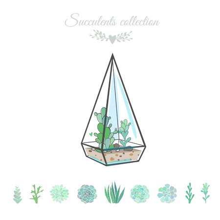 vector illustration with succulents in geometric vase, isolated on white