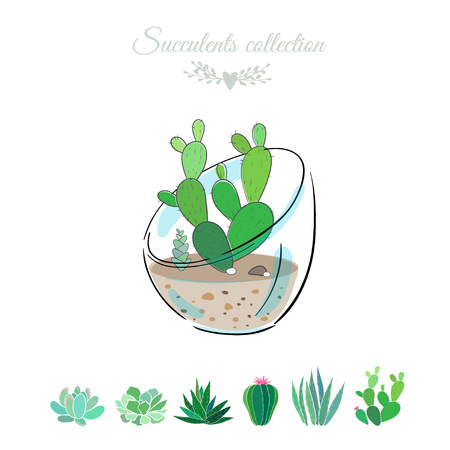 Vector illustration with cactus in a glass bowl.