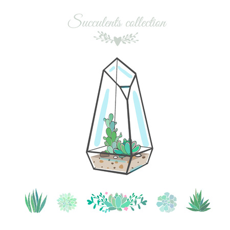 moss: vector illustration with succulents in geometric vase, isolated on white, succulent set Illustration