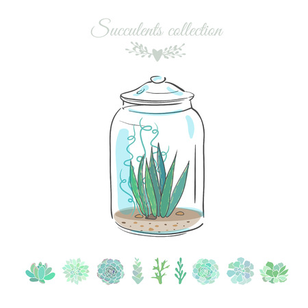 succulent plant in a glass jar, vector illustration with floral composition in a decorative glass vase
