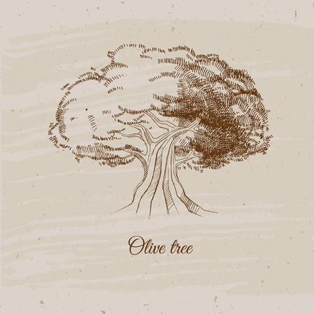 vintage olive tree, hand drawn vector illustration