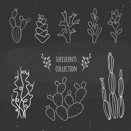 moss: Vector sketch with cactuses, succulents and lichens. Illustration