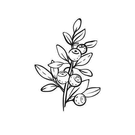 ブルーベリーの枝のスケッチ