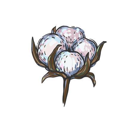 ベクトルの綿の花のイラスト。  イラスト・ベクター素材