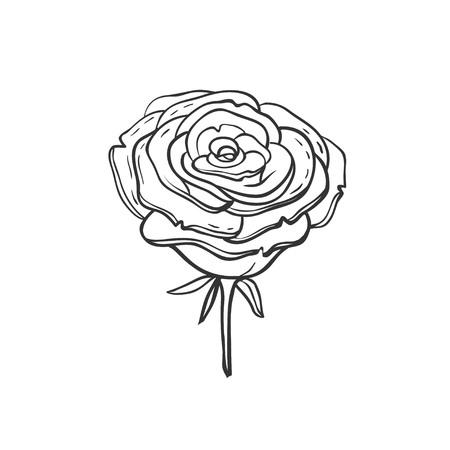 手描きのバラ。