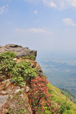 Landscape at Cliff on Phu Luang wildlife sanctuary, loei province, Thailand.  photo