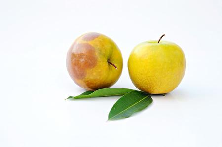 Rotten Green Apple photo