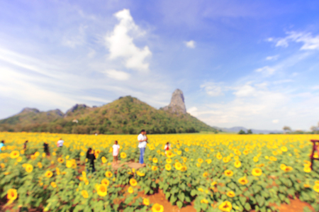 Blur lights, abstract background, Sunflower Field