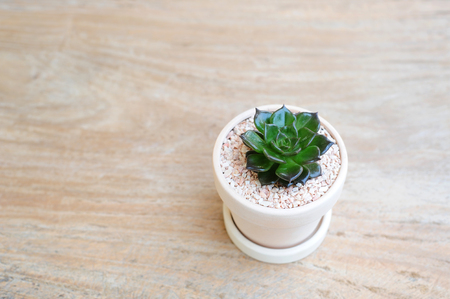 Ornamental plant in clay pot on wooden background
