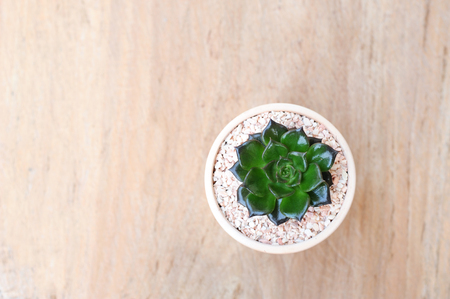 Ornamental plant in clay pot on wooden background (top view)