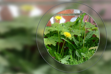 Round glass window with wall and dandelions