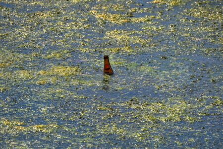 garbage, bottle disposed of in a pond full of algae.