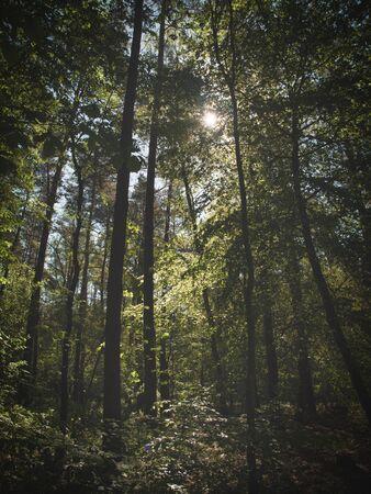 Sunlight illuminate the undergrowth of the forest. Reklamní fotografie