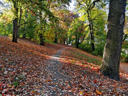 Hiking trail covered with autumn leaves.