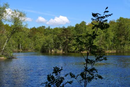 Small lake located in the middle of the forest. Stock Photo - 130813478
