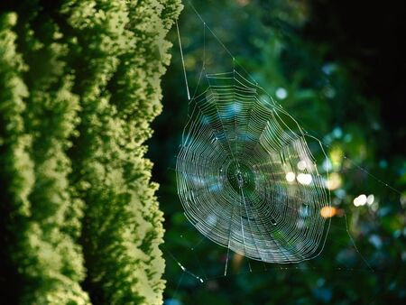 A spiderweb illuminated between the trees of the sun. Stock fotó