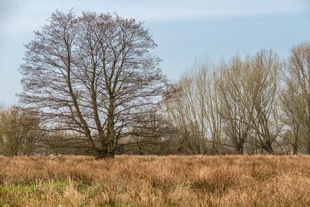 Freestanding tree from a moor meadow