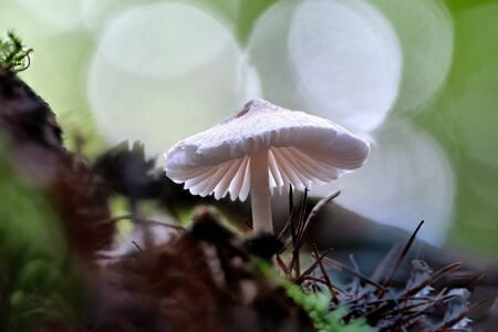 Small white mushroom with slats and a beautiful background with bokeh. Stock fotó