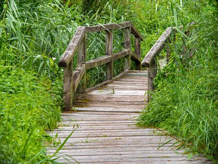 Wooden walkway with a wooden bridge in the moor overgrown with reeds. Stock fotó