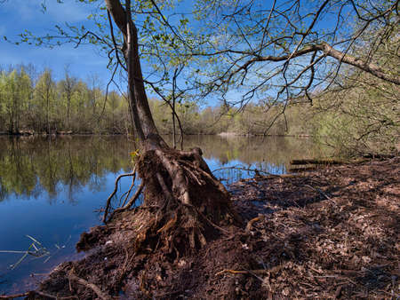 Air roots of submerged trees on the shores of a lake