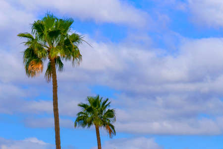 Palm trees in front of a blue sky with many clouds.