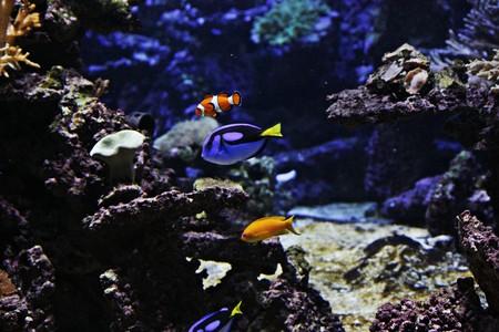 Fish in blue water in aquarium photo