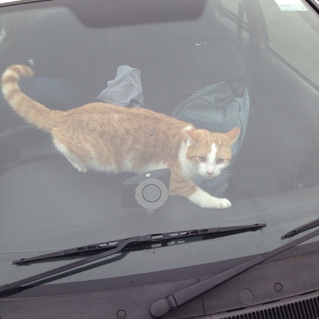maliziosa: Malizioso gatto