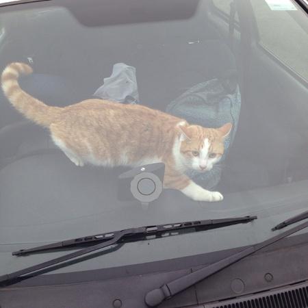 mischievous: Mischievous cat