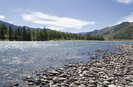 katun: Bank of the Katun river in the summer