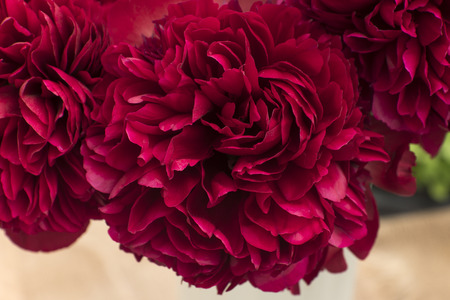peonies: crimson peonies Stock Photo