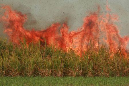 sugar cane burning Stock Photo - 1833182